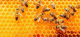 Inside the Beehive: Life Within a Hive Essay